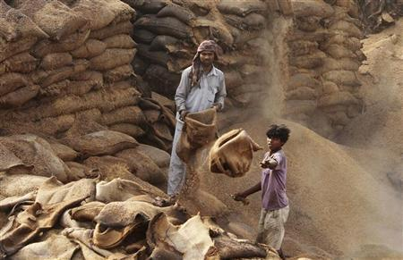 Labourers gather sacks of rotten paddy crop at Khamano village, in Punjab June 22, 2012. REUTERS/Ajay Verma