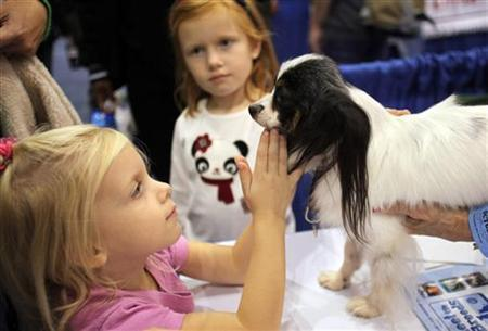 A girl pets a Papillon dog at the ''Meet the Breeds'' exhibition in New York October 17, 2009. REUTERS/Natalie Behring
