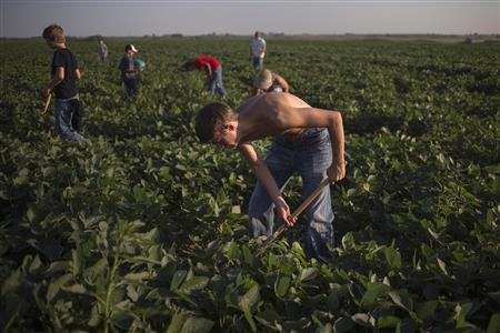 Kirk Berry, 16, helps clear weeds from a soybean field with other members of his church youth group in Brooklyn, Iowa July 11, 2012. REUTERS/Adrees Latif