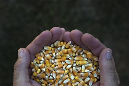 A farmer poses with a handful of corn kernels in DeWitt, Iowa July 12, 2012. REUTERS/Adrees Latif