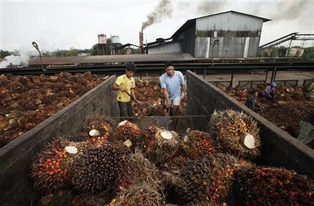 Workers unload oil palm fruits in a state-owned crude palm oil processing unit in North Sumatra May 29, 2012. REUTERS/Tarmizy Harva
