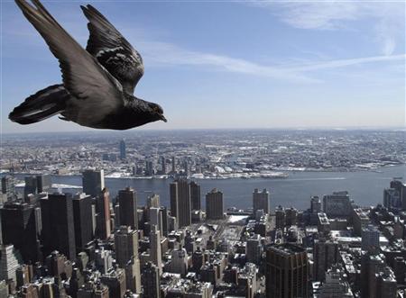 A pigeon flies over New York March 3, 2009. REUTERS/Gleb Garanich