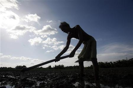 A farmer works in a paddy field on the outskirts of Agartala, capital of India's northeastern state of Tripura, July 9, 2012. REUTERS/Jayanta Dey