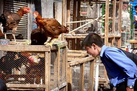 An Iranian boy looks at chickens for sale in Chicken Alley, a center for the sale of live birds in south Tehran October 18, 2005. REUTERS/Morteza Nikoubazl