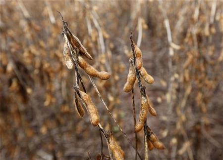Soy crops are seen in a farm in the city of Tangara da Serra in Cuiaba March 27, 2012. REUTERS/Paulo Whitaker