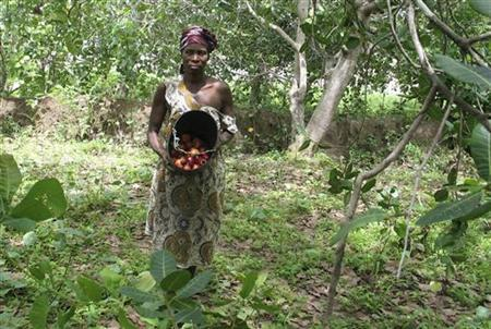 A woman shows the cashew fruit which she has collected from the ground in a forest of cashew trees in Bissauzinho, the Biombo region west of the capital, June 26, 2008. REUTERS/Pascal Fletcher