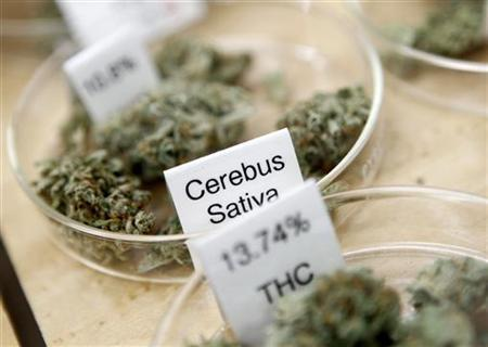 Strains of marijuana and their THC potency ratings are shown for sale at the Harborside Health Clinic in Oakland, California June 30, 2010. REUTERS/Robert Galbraith