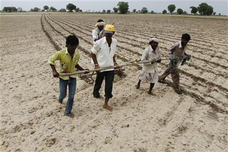 Farmers plough and sow cotton seeds in a field in Shahpur village, about 79 km (49 miles) west of Ahmedabad July 13, 2012. REUTERS/Amit Dave
