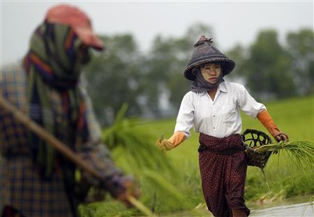 Farmers plant rice seedlings in a paddy field on the outskirts of Yangon July 13, 2012. REUTERS/Soe Zeya Tun