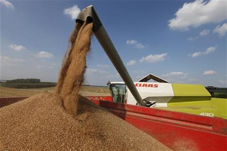 Wheat pours into a truck as a French farmer harvests his crop in Bugnicourt in northern France August 9, 2012. REUTERS/Pascal Rossignol