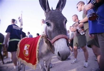 ''Smoke'' the donkey, adopted by retired U.S. Marine Colonel John Folsom, is seen in this undated handout photo taken by Folsom at an unidentified location in Iraq and released by the Society for the Prevention of Cruelty to Animals. REUTERS/John Folsom/SPCA/Handout/Files