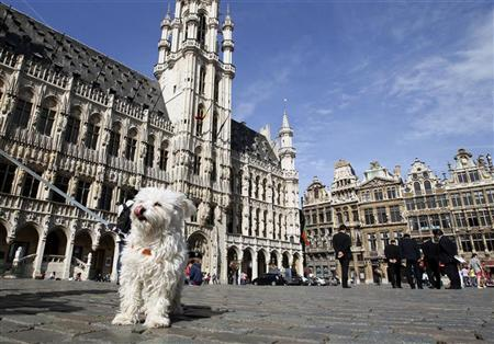 A dog stands on Brussels' Grand Place August 11, 2011. Brussels, the capital of Belgium, which is also the administrative heart of Europe attracts thousands of tourists to its main square all year-long. REUTERS/Yves Herman