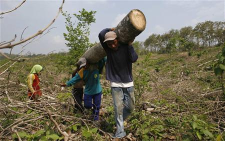 Workers carry a log after cutting it in a forest owned by state-owned forestry enterprise Perhutani, in Jombang, Indonesia's East Java province June 20, 2012. REUTERS/Sigit Pamungkas