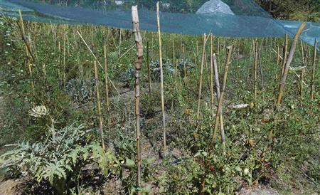 A vegetable garden is seen at an eco-commune in the village of Aghios, Evia island, northeast of Athens July 23, 2012. The self-sufficient eco-commune that lives in yurts and grows its own vegetables is enjoying a surge of interest from crisis-hit Greeks returning to their rural roots. Picture taken July 23, 2012. REUTERS/Deepa Babington