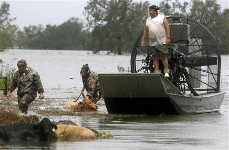Sherry Henson (L) and Charmin Cosse work in the water to try to save cattle along Highway 23 after Hurricane ISAAC in Plaquemines Parish, Louisiana August 30, 2012. REUTERS/Sean Gardner
