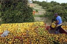 Trabalhador carrega caminhão com caixas de laranja em fazenda, em Limeira. A economia brasileira cresceu 0,4 por cento no segundo trimestre deste ano quando comparada com o primeiro trimestre, informou o Instituto Brasileiro de Geografia e Estatística (IBGE). 13/01/2012 REUTERS/Paulo Whitaker