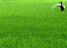 Фермер удобряет почву на рисовом поле на окраине индийского города Амритсар, 2 августа 2005 года. Агрохимическая группа Фосагро победила в тендере на продажу 20-процентой доли государства в крупнейшем в РФ производителе апатитового концентрата - сырья для производства удобрений, сказал в среду министр экономики Андрей Белоусов во Владивостоке. REUTERS/Munish Sharma