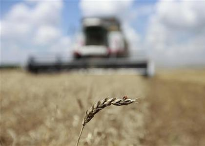 An employee operates a combine to harvest wheat at a field, owned by ''Ternovskoye'' collective farm, with a ladybird sitting on a wheat stalk, near the village of Trunovskoye, some 60 km (37 miles) north of Russia's southern city of Stavropol in southern Russia in this July 11, 2012 file photo. REUTERS/Eduard Korniyenko/Files