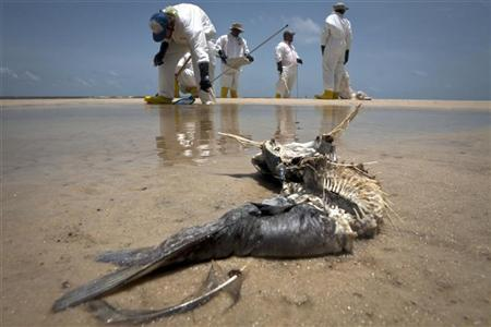 A decomposed fish lies in the water as workers pick up oil balls from the Deepwater Horizon oil spill in Waveland, Mississippi in this July 7, 2010 file photo. REUTERS/Lee Celano/Files