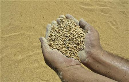 A worker displays rotten wheat grains at a godown on the outskirts of Amritsar in Punjab June 28, 2012. REUTERS/Munish Sharma