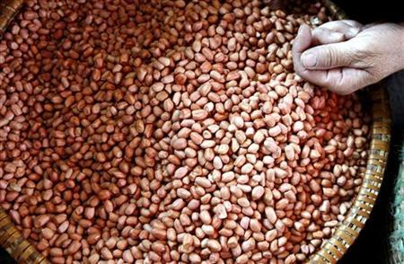 A vendor sells peanuts at the Voi market, 20 km (12.5 miles) south of Hanoi April 17, 2008. REUTERS/Kham
