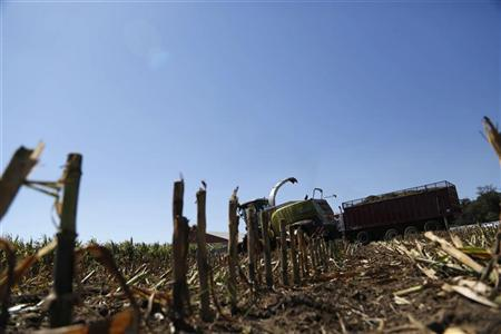 Corn harvesters chop malnourished corn due to extreme heat and drought at Sunburst Dairy in Belleville, Wisconsin September 6, 2012. REUTERS/Darren Hauck