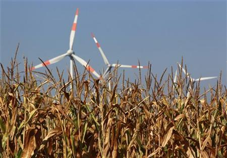 A corn field in front of wind turbines at the western town of Fuechtorf September 9, 2012. REUTERS/Ina Fassbender