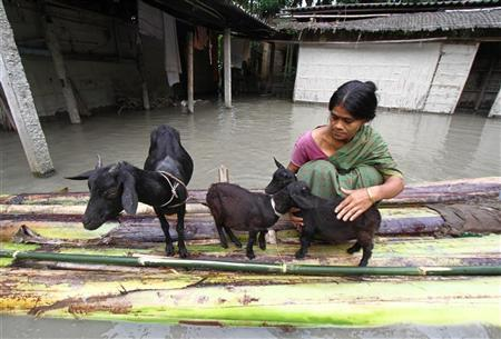 A flood affected victim puts her goats on a raft made from banana trees outside her flooded hut at Lachi Bishnupur village in the northeastern Indian state of Assam September 22, 2012. REUTERS/Utpal Baruah