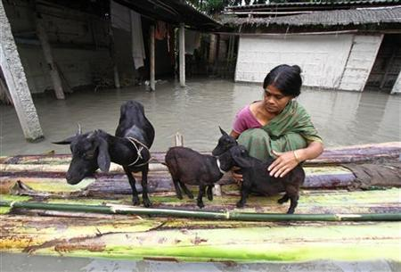 A flood affected victim puts her goats on a raft made from banana trees outside her flooded hut at Lachi Bishnupur village in Assam September 22, 2012. REUTERS/Utpal Baruah