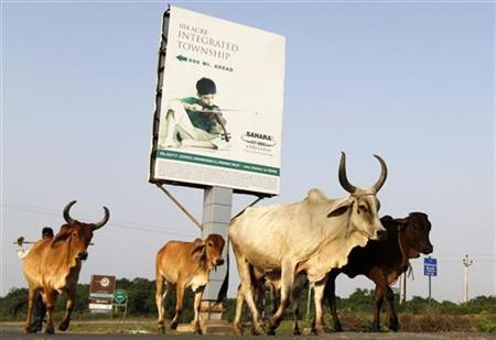 Cattle move past a Sahara advertisement board installed at a township under construction, owned by Sahara group on the outskirts of Ahmedabad September 20, 2012. REUTERS/Amit Dave