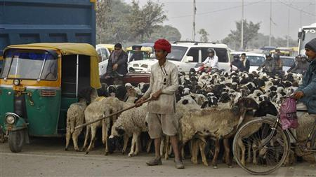 A nomadic shepherd with his herd of sheep waits for the signal at a busy road junction in Noida on the outskirts of New Delhi January 3, 2012. REUTERS/Parivartan Sharma