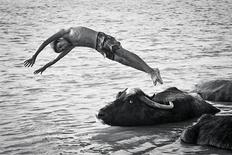 A submission for the aDay.org project shows a boy diving near water buffaloes in Ahvaz, Iran, on May 15, 2012. A digital display of 45 photos on more than 85,000 screens in 22 countries around the globe sought on Monday to capture one day of the human experience in what organisers called the largest global photography exhibition ever staged. REUTERS/Mehran Hamrahi/Courtesy of Aday.org/Handout