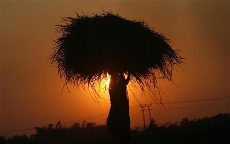 A woman farmer carrying paddy crop is silhouetted against the setting sun on the outskirts of Agartala, capital of Tripura November 24, 2011. REUTERS/Jayanta Dey/Files