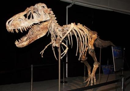 The skeleton of a Tyrannosaurus Bataar dinosaur is pictured in this undated handout photo received by Reuters October 17, 2012. REUTERS/U.S. Department of Justice/Handout
