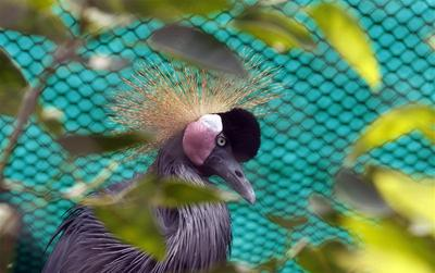 Beaks and feathers
