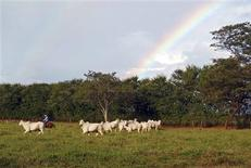 A rancher herds cattle in Minas Gerais State, October 20, 2012. REUTERS/Reese Ewing