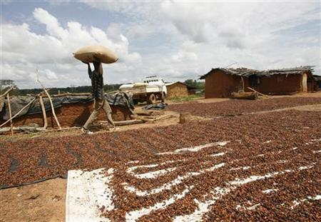 A farmer walks past cocoa beans laid out to dry at Kouadioyaokro, about 130 km (81 miles) north of Abidjan November 12, 2009. REUTERS/Luc Gnago