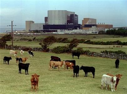 Cattle graze in front of British Nuclear Electric's Wylfa Magnox plant in Anglesey, Wales in a September 13, 1995 file photo. REUTERS/Bob Collier
