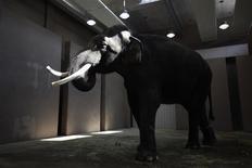 """<p>Koshik, un éléphant du zoo d'Everland, en Corée du Sud, est capable d'imiter le langage humain en prononçant plusieurs mots de coréen, indiquent des chercheurs de l'université de Vienne. En enfonçant sa trompe dans sa bouche pour former les sons, le pachyderme parvient à prononcer cinq mots de coréen: """"bonjour"""", """"assis"""", """"non"""", """"couché"""" et """"bien"""". /Photo prise le 2 novembre 2012/REUTERS/Kim Hong-Ji</p>"""
