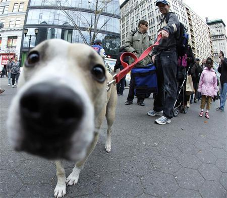 Jessie sniffs the camera lens as his owner Matt Murphy joins the people queuing for a bag of dry ice in Union Square in the aftermath of Hurricane Sandy in New York November 2, 2012. More than 1.2 million homes and businesses in New York and 1.5 million in New Jersey were still without power on Friday, four days after Hurricane Sandy slammed into the U.S. East Coast, the states' power companies said. REUTERS/Carlo Allegri