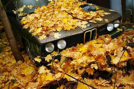 File photo of an old BMW automobile covered in dead leaves in Hanau, 35 km (21 miles) south of Frankfurt, October 27, 2012. BMW, the world's largest premium carmaker, sees no reason why its core car business cannot achieve an operating profit margin next year in line with its targeted range of 8-10 percent, the company's finance chief said on November 6, 2012. REUTERS/Kai Pfaffenbach/Files