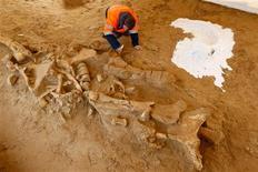 """Arqueólogos franceses han descubierto un raro esqueleto casi completo de un mamut cerca de París, junto a unos pequeños fragmentos de herramientas de piedra que sugieren que el animal hubiera sido cortado por cazadores prehistóricos. En la imagen, un arqueólogo francés del Instituto Nacional Francés para la Investigación Arqueológica Preventiva (INRAP) trabaja en la excavación de los restos de un esqueleto de mamut lanudo, apodado """"Helmut"""" por el euquipo de excavación, en Changis-sur-Marne, al este de París, el 8 de noviembre de 2012. REUTERS/Benoit Tessier"""