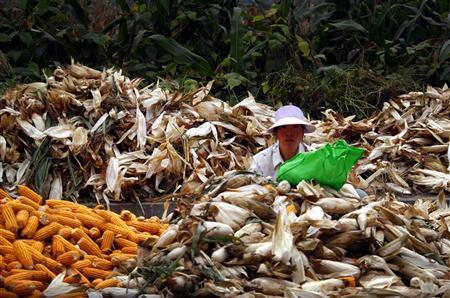 A woman sits between piles of corn as she removes the husks on a road located on the outskirts of Beijing October 16, 2012. REUTERS/David Gray