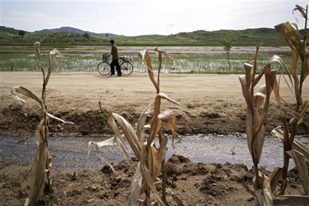 11月12日、国連食糧農業機関は、北朝鮮の2012─13年初期の穀物収穫量が前期比10%増になるとの見通しを示した上で、依然として食糧不足と栄養失調が問題だと指摘。写真は峰泉郡の農場で昨年8月撮影。国際赤十字提供(2012年 ロイター/Morten Hvaal)