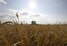 """Комбайн собирает урожай пшеницы около казахского города Акколь 11 октября 2011 года. Казахстан, крупнейший производитель зерна в Центральной Азии, завершил уборку урожая 2012 года, собрав 12,3 миллиона тонн зерна в чистом весе, однако еще будет перепроверять данные из-за """"приписок"""", выявленных в основных зерносеющих областях страны, сообщило министерство сельского хозяйства. REUTERS/Shamil Zhumatov"""