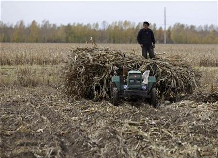 A farmer stands on a tractor loaded with corn stalks at a private plantation near Suibin state farm, Heilongjiang province October 16, 2012. REUTERS/David Stanway