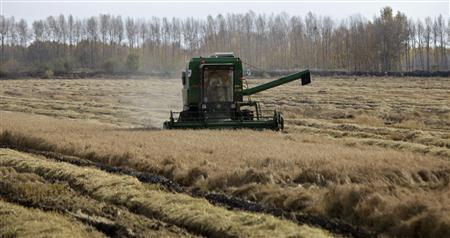 A farmer drives a harvester to reap through a corn field in Suibin state farm, Heilongjiang province in this October 16, 2012 file photo. China needs to replace millions of workers who have quit farms for cities, but even its vast state power might not be able to transform the countryside into a network of big industrial farms capable of feeding its growing economy. Pulling together small plots of land to make larger operations and introducing modern mechanical techniques would help boost productivity, vital if China's agricultural sector is to meet soaring domestic food demand.REUTERS-David Stanway-Files