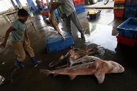 A boy helps out at a man who is cutting a fish at a fish market in Chorrillos beach in Lima November 12, 2012. REUTERS/Mariana Bazo
