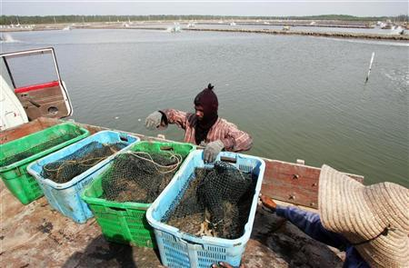 Workers load baskets of shrimps onto a truck at a shrimp farm, which was formerly a mangrove swamp, in Kuala Selangor, 90 km (56 miles) west of Kuala Lumpur, June 10, 2005. REUTERS/Bazuki Muhammad BM/mk