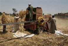 <p>Imagen de archivo de un grupo de granjeros cosechando trigo en una máquina en las afueras de El Cairo, mayo 19 2008. Egipto, el mayor importador mundial de trigo, eliminará a Ucrania de su lista de proveedores en el 2013 tras recibir una notificación de que Kiev suspenderá sus exportaciones a partir del 1 de diciembre, dijo el jueves la procuradora del Estado. REUTERS/Asmaa Waguih</p>
